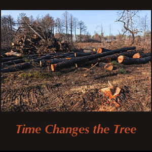 Time Changes the Tree